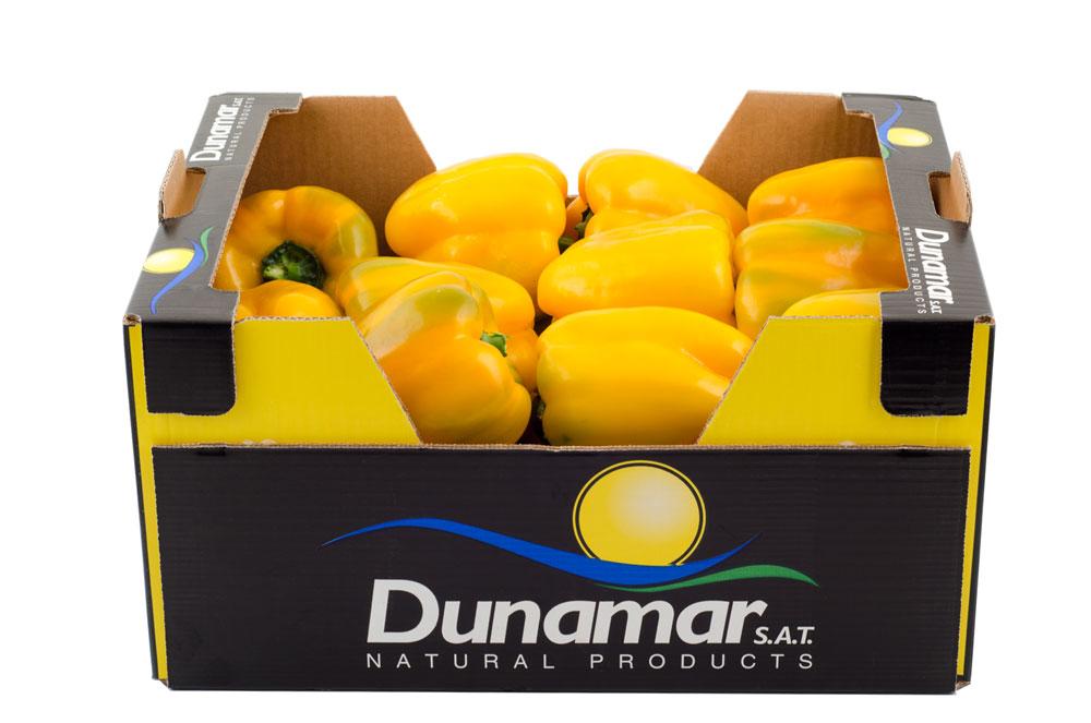 pimiento-california-amarillo-DN-011